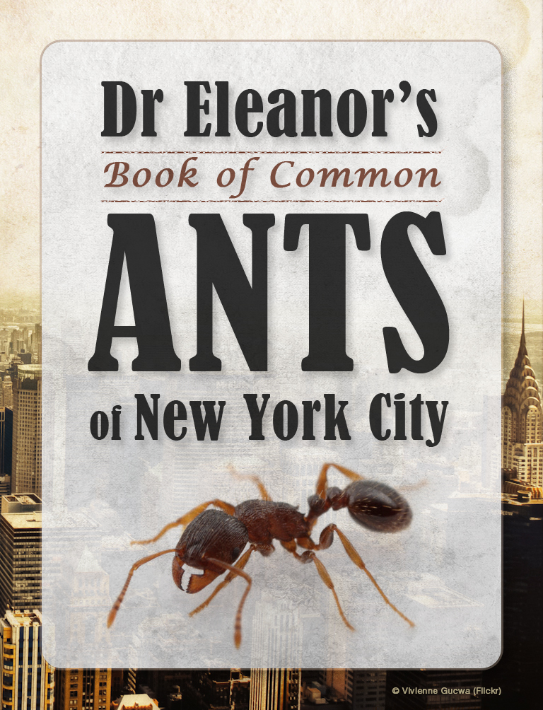 Dr. Eleanor's Book of Common Ants of NYC