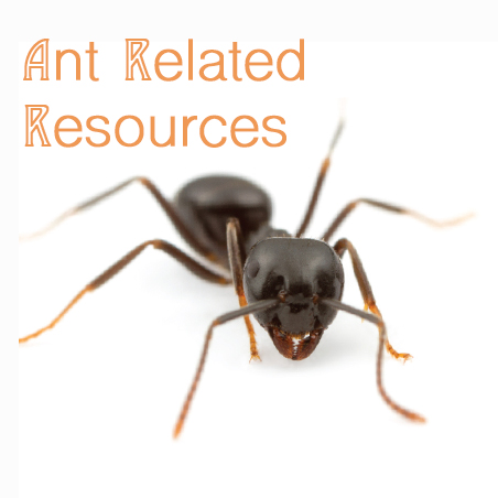 Discover Ants