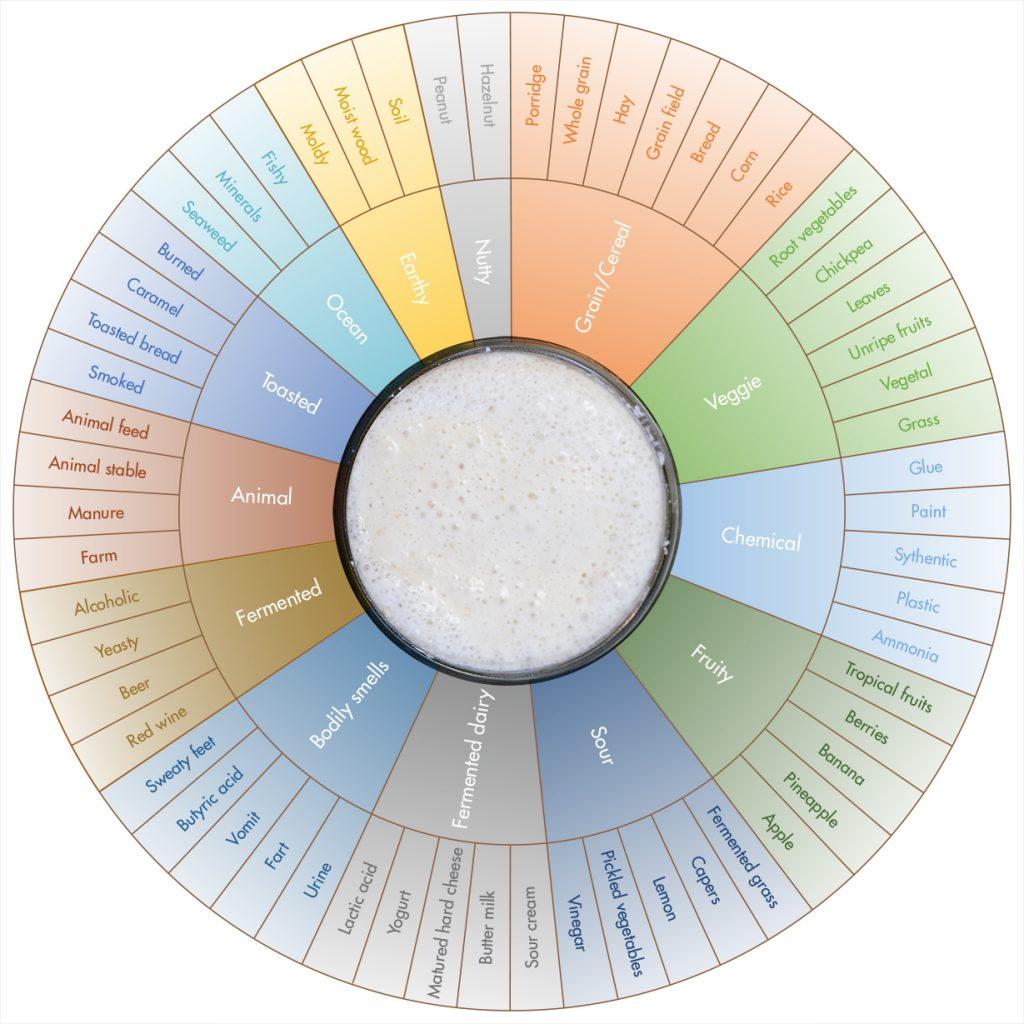 Sourdough aroma wheel