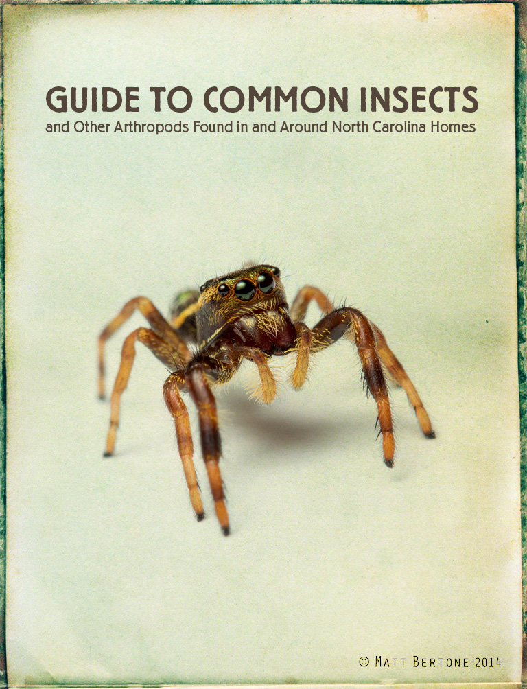 Arthropods of Homes Guide