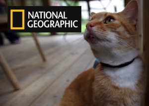 Cat Tracker - National Geographic