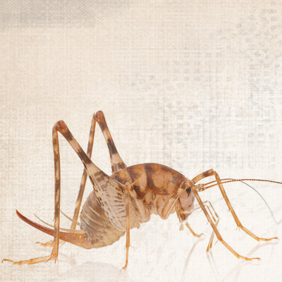 cricket_project