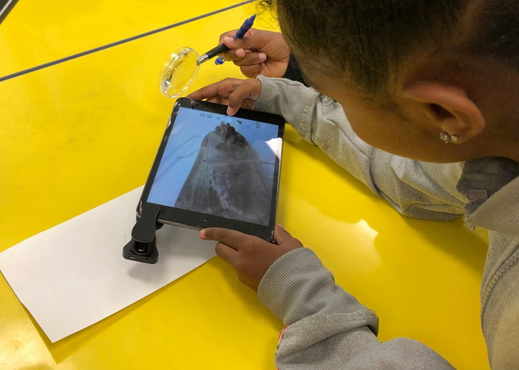 Taking photos of insects in classrooms