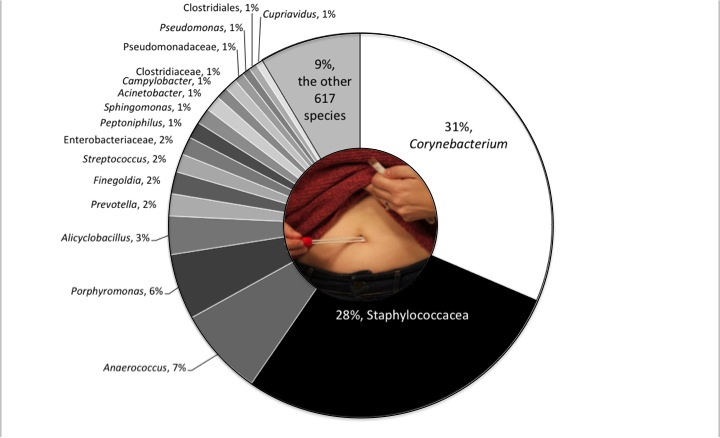 "The relative abundance of different microbial ""species"" (technically operational taxonomic units, OTUs) across all the belly buttons sampled. Each pie wedge represents a single species, with the size of the wedge a function of the total abundance of that species (total number of reads). Species can have many occurrences either by being present on many people or being represented by many individuals when present. In practice, the most abundant species in belly buttons are all both found on many people and abundant on those individuals."